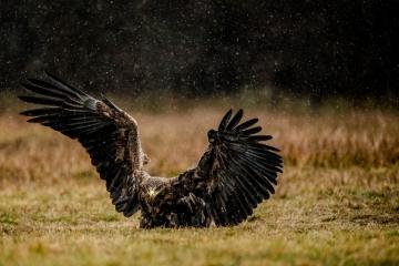 seeadler-retofuerst-photography-3