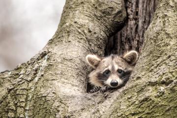 mammals-retofuerst-photography-1