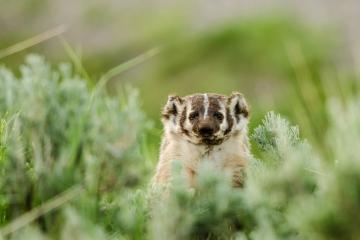 mammals-retofuerst-photography-2