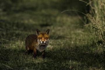 mammals-retofuerst-photography-3