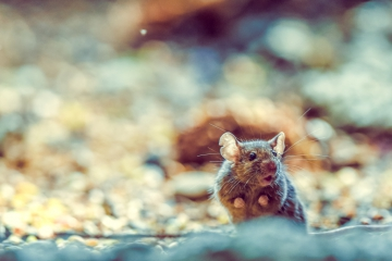 mammals-retofuerst-photography-4