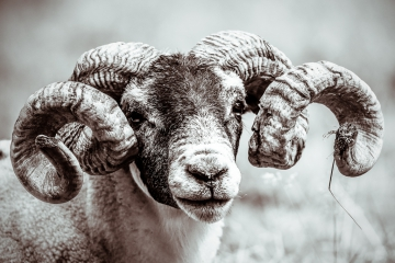 mammals-retofuerst-photography-5