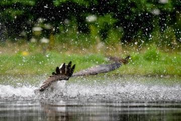 osprey-retofuerst-photography-1