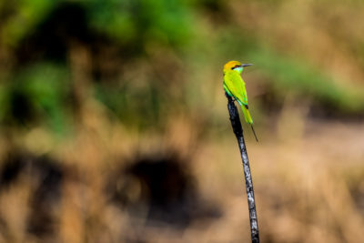 A weekend birding at Okhla wildlife sanctuary
