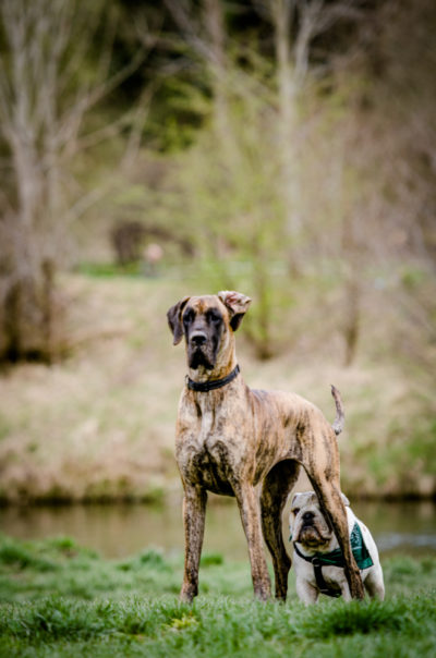 some ideas for dog photography
