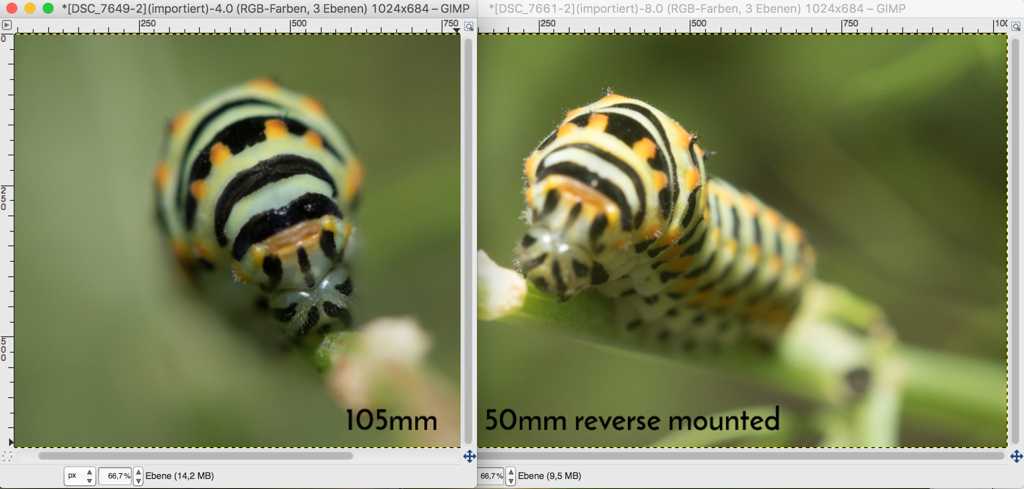 macro lens vs extension tube