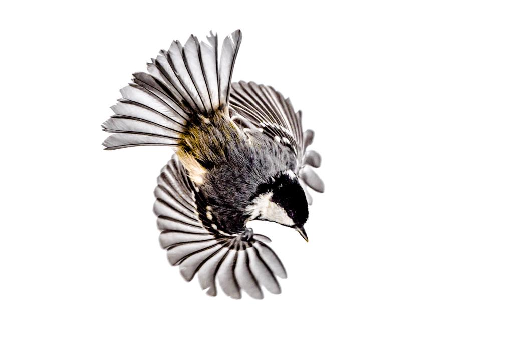 Isolated birds on white background