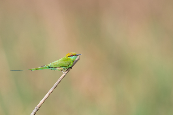 Bird photography at Okhla