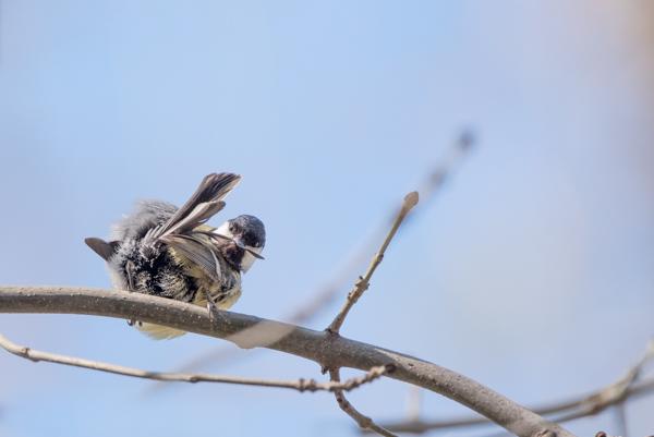 bird in bratislava