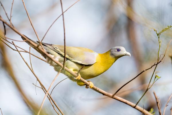 Bird photography at Okhla