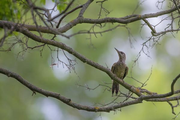 bird photography in bratislava